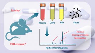 PXB-mouse-human-disproportionate-metabolites-e1614788082447