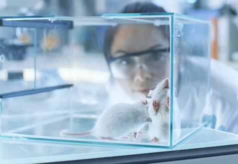researcher studying mice