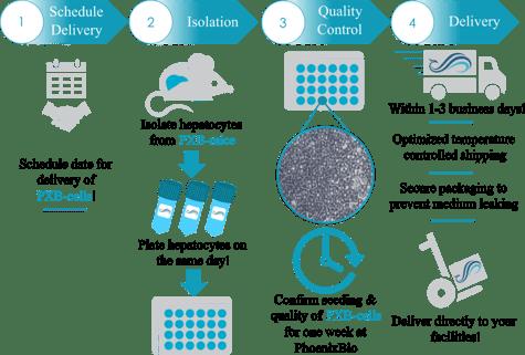 process_PXB-cells_2